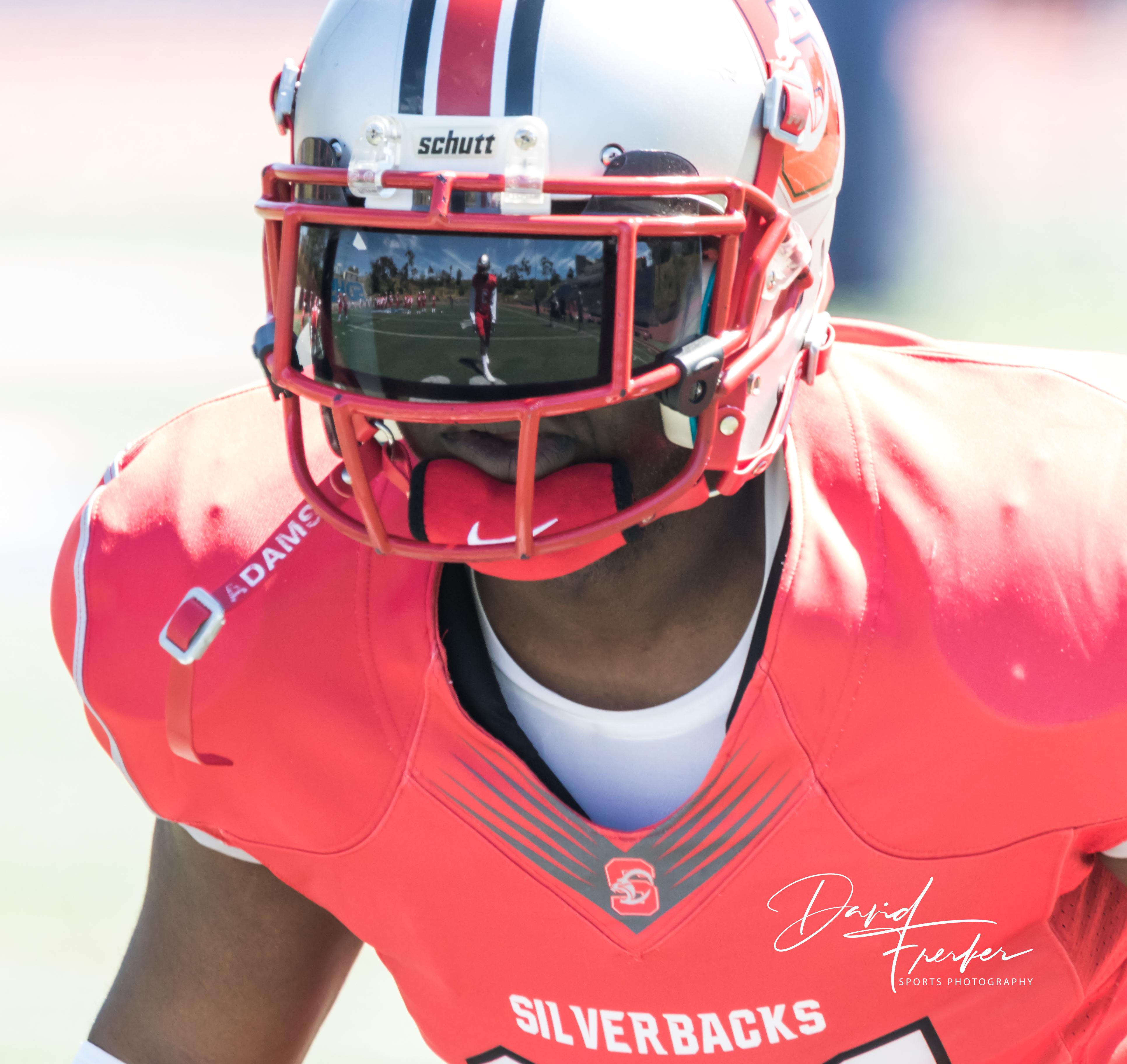 Silverbacks13
